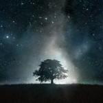 sa_1490067651ws_Tree_Grass_Stars_Glowing_Night_1920x1200