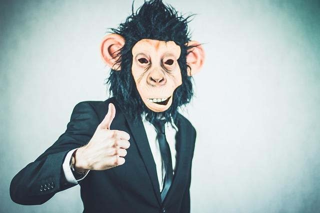 monkey-2710658_640